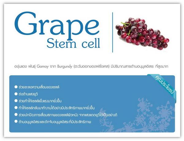 phyto stemcell ของแท้, ไฟโต สเต็มเซลล์ ของแท้, ไฟโต เอสซี สเต็มเซลล์ ของแท้, phyto sc stem cell ของปลอม, phyto sc stemcell ของปลอม, phyto stem cell ของปลอม, phyto stemcell ของปลอม, ไฟโต สเต็มเซลล์ ของปลอม, ไฟโต เอสซี สเต็มเซลล์ ของปลอม, phyto sc stem cell รีวิว, phyto sc stemcell รีวิว, phyto stem cell รีวิว, phyto stemcell รีวิว, ไฟโต สเต็มเซลล์ รีวิว, ไฟโต เอสซี สเต็มเซลล์ รีวิว, phyto sc stem cell พันพิป, phyto sc stemcell พันพิป, phyto stem cell พันพิป, phyto stemcell พันพิป, ไฟโต สเต็มเซลล์ พันพิป, ไฟโต เอสซี สเต็มเซลล์ พันพิป, phyto sc stem cell pantip, phyto sc